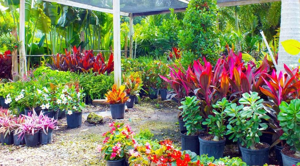 Plant Nursery in Pine Island