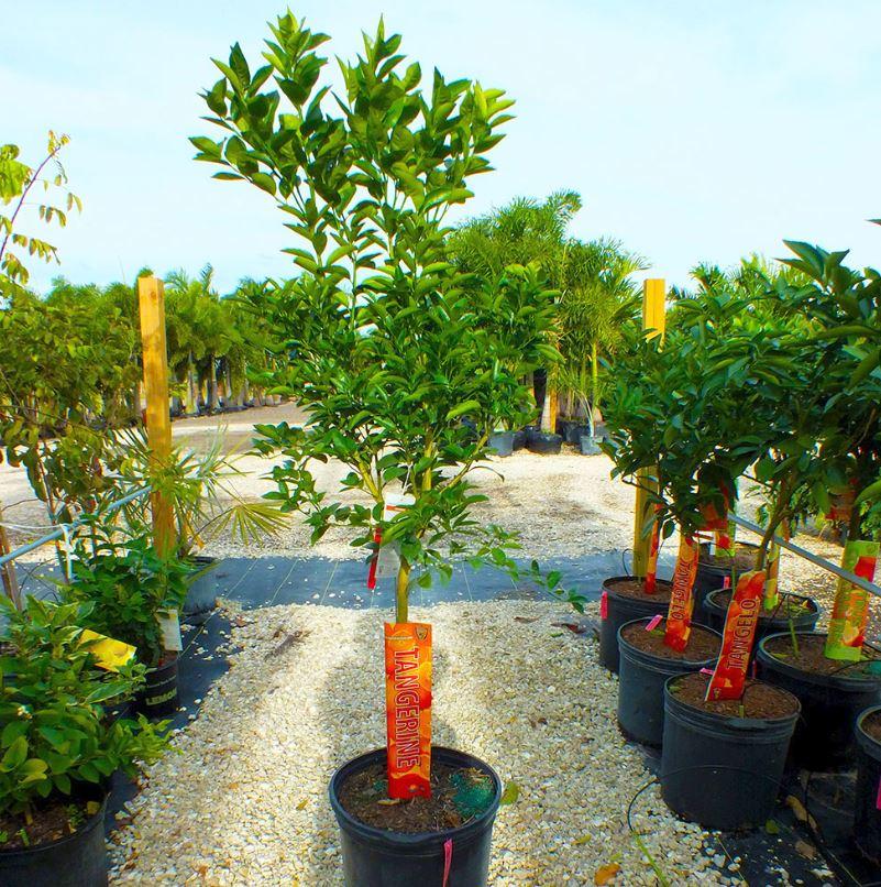 Tree Nursery in Pine Island