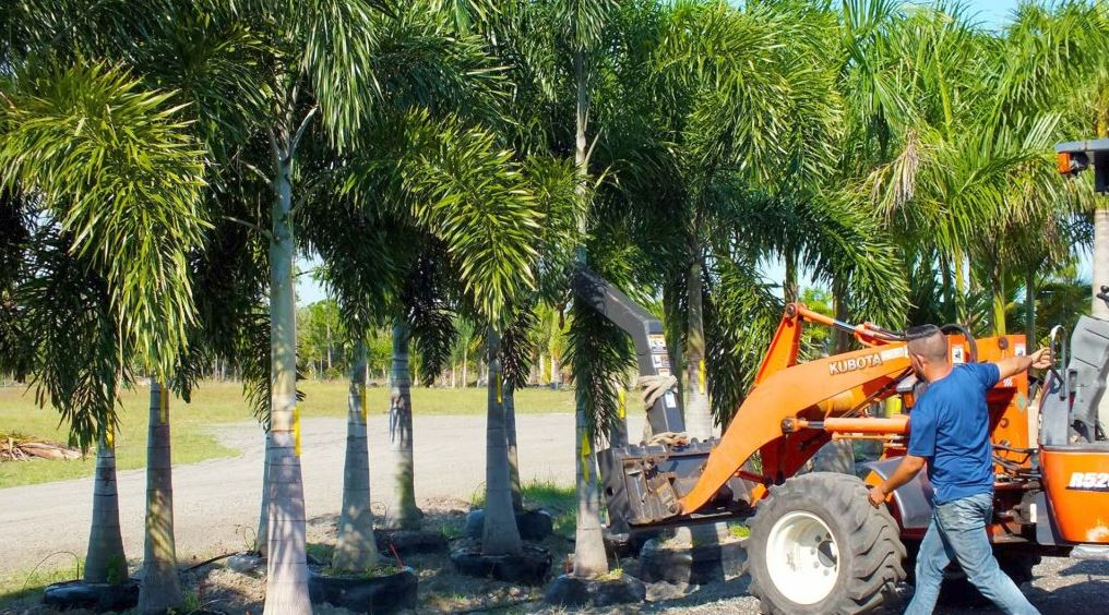 Tree Installation Services in Pine Island