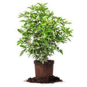Buy Shade Trees & Plants in Punta Gorda, Florida