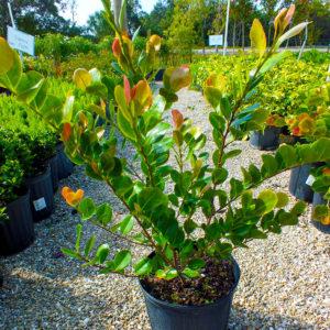 Plant Nursery in Cape Coral, Florida