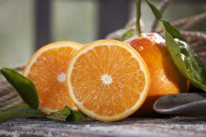 Buy Citrus Trees Pine Island