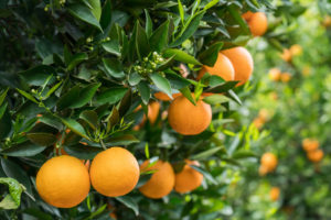 Types of Fruit Trees