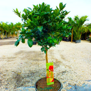 Fast Growing Fruit Trees