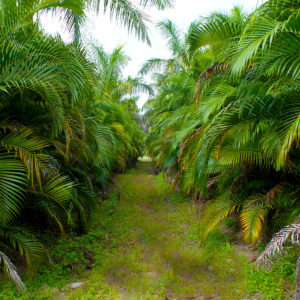Florida Wholesale Palms Farm