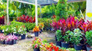 Plant Nursery in Punta Gorda